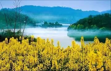 油菜花开 畅游去——第四届四川自驾赏花节开幕在即